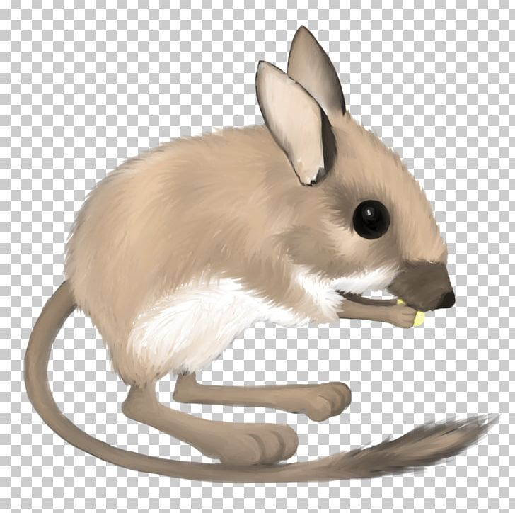 Desert Kangaroo Rat Mouse Merriam's Kangaroo Rat Ord's Kangaroo Rat.