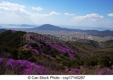 Pictures of Beautiful Azalea Festival in South Korea, Ganghwa.