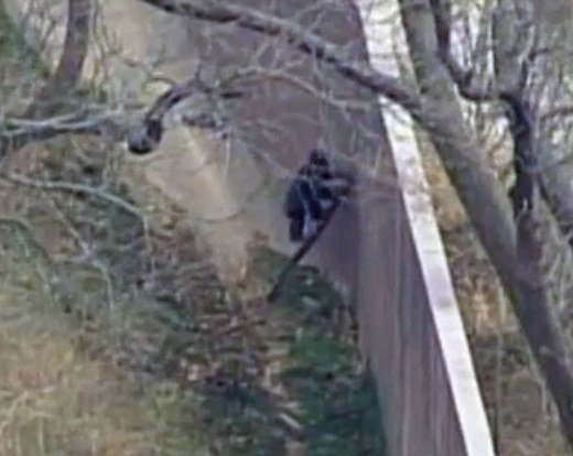 Kansas City Zoo Chimps Stage 'Madagascar' Style Escape Kids News.