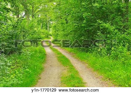 Stock Photograph of Dirt Road in the Forest, Spring, Nature.