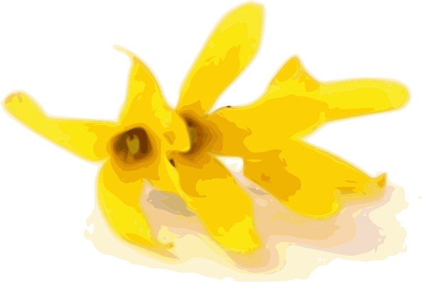 Forsythia Clip Art at Clker.com.