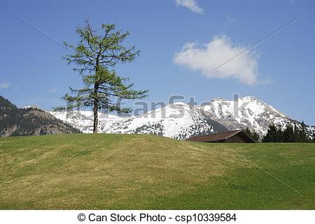 Pictures of Alpine Tree.