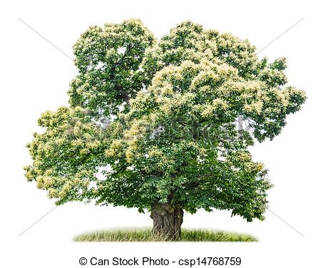 Kastanienbaum im herbst clipart.