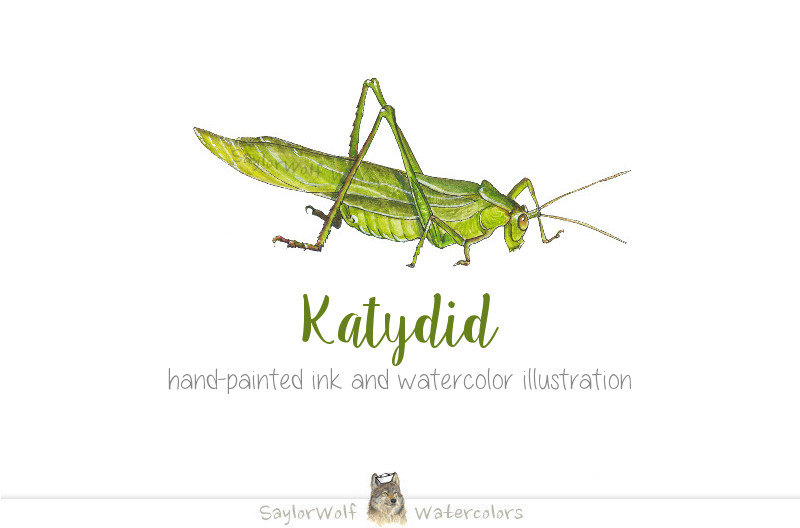Digital Art For All You Robots — Katydid Ink and Watercolor Insect.