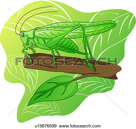 Clip Art of arthropod, grasshopper, leaf, branch, katydid.