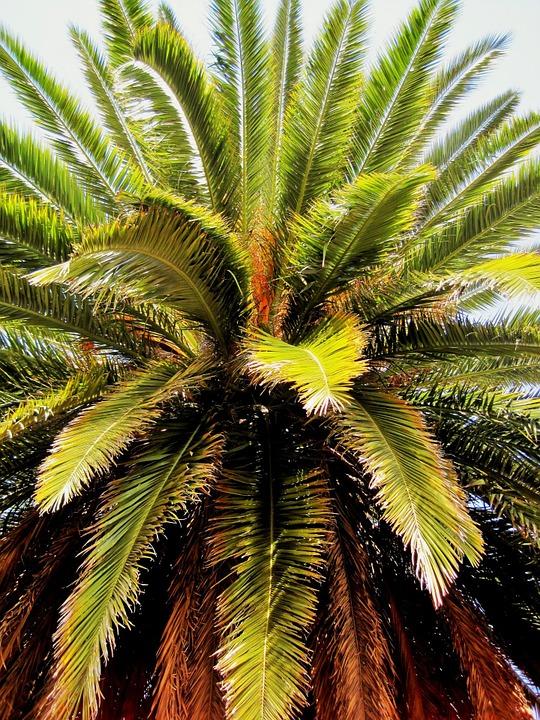 Tropical, Ornamental.