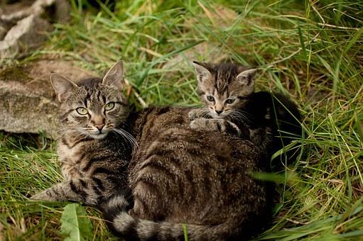 Kitten, People.