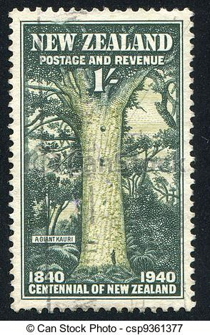 Picture of Giant Kauri.