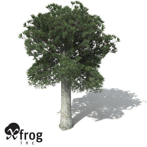 Kauri Tree Cartoon.