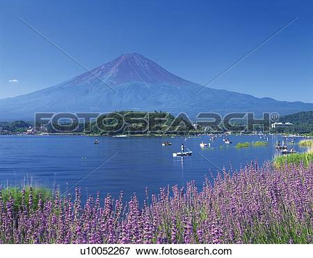 Picture of Mt. Fuji and Lake Kawaguchi in summer, Kawaguchiko town.