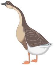Goose Clip Art, Vector Goose.