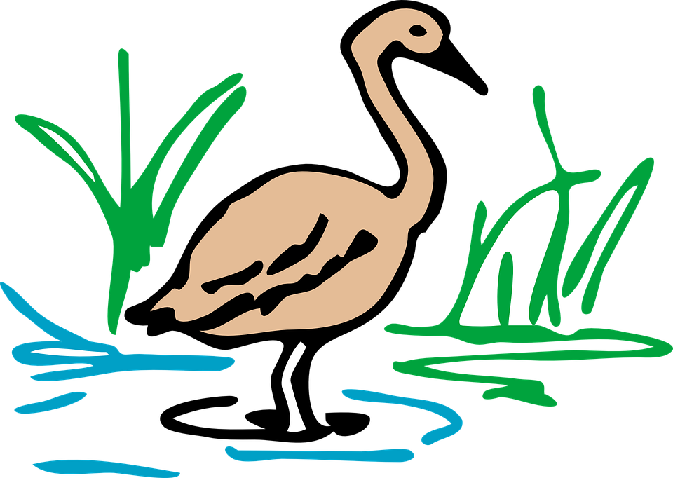 Free vector graphic: Brown, Duck, Goose, Bird, Waterfowl.