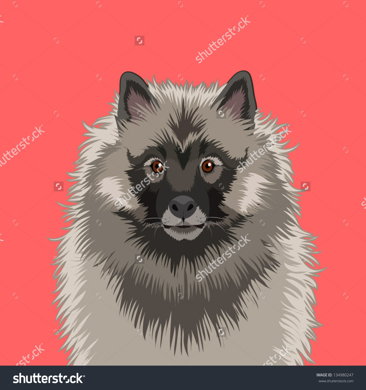 Keeshond, The Buddy Dog Stock Vector Illustration 134980247.