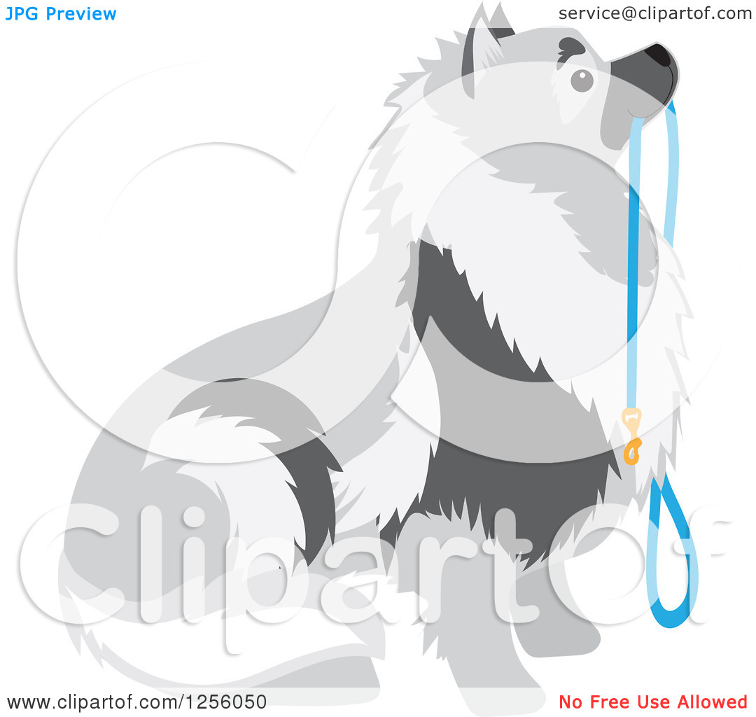 Clipart of a Cute Keeshond Dog Sitting with a Leash.