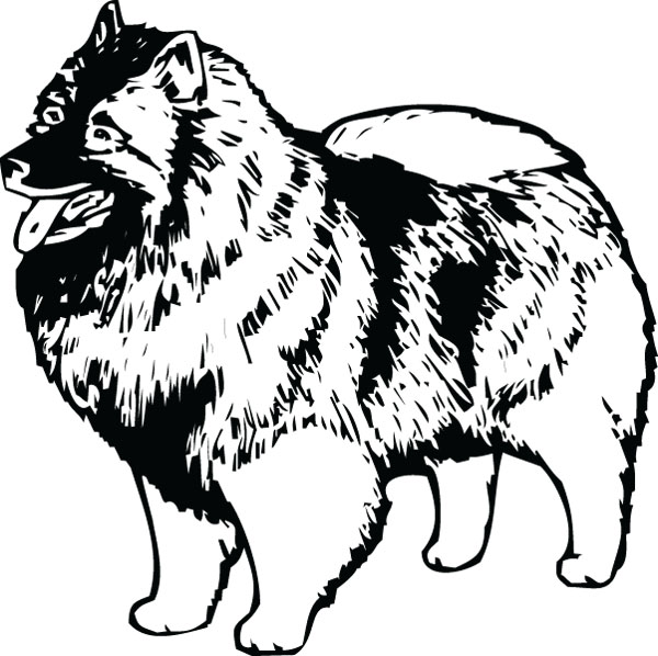 Keeshond Dog Breed Graphic For Custom Engraved Gifts.