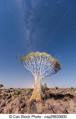 Stock Photography of Quiver Tree Forest.