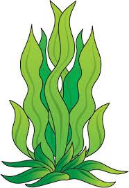 Kelp Clip Art.