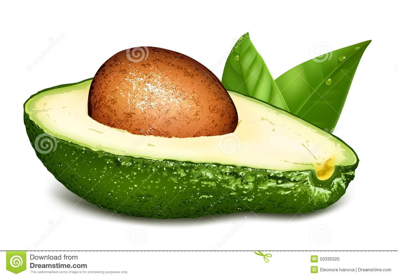 Ripe Avocado Stock Illustrations.