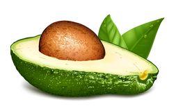 Ripe Avocado Stock Illustrations.