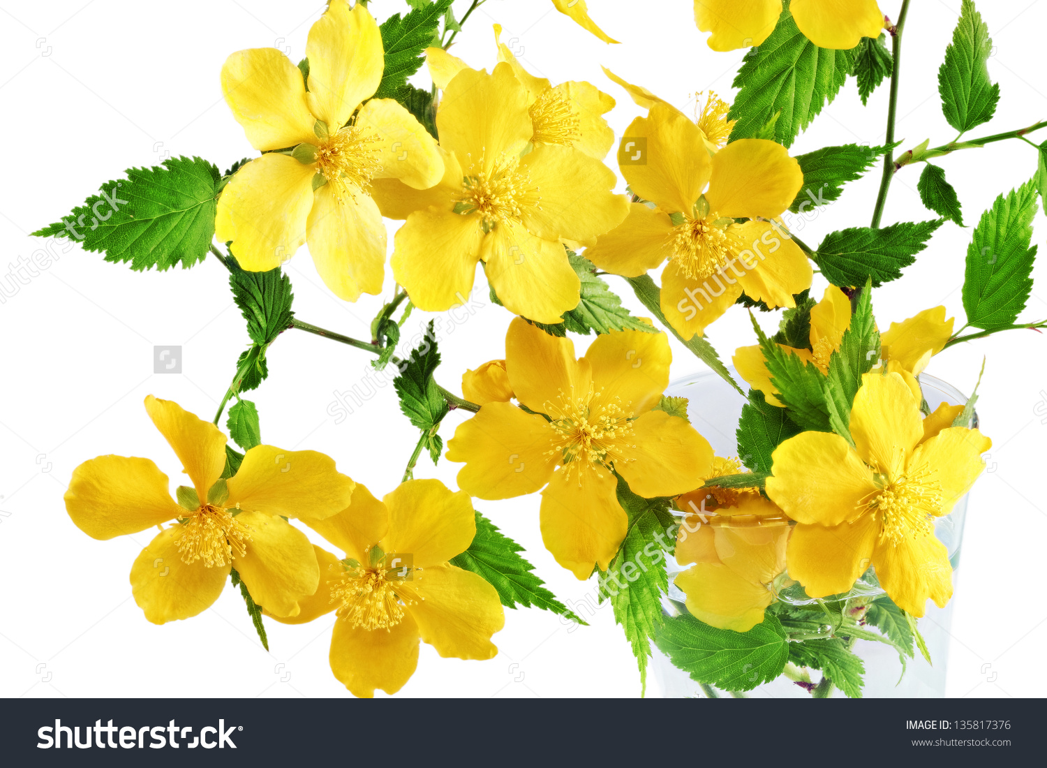 Kerria Japonica Yellow Wildflowers Vase On Stock Photo 135817376.