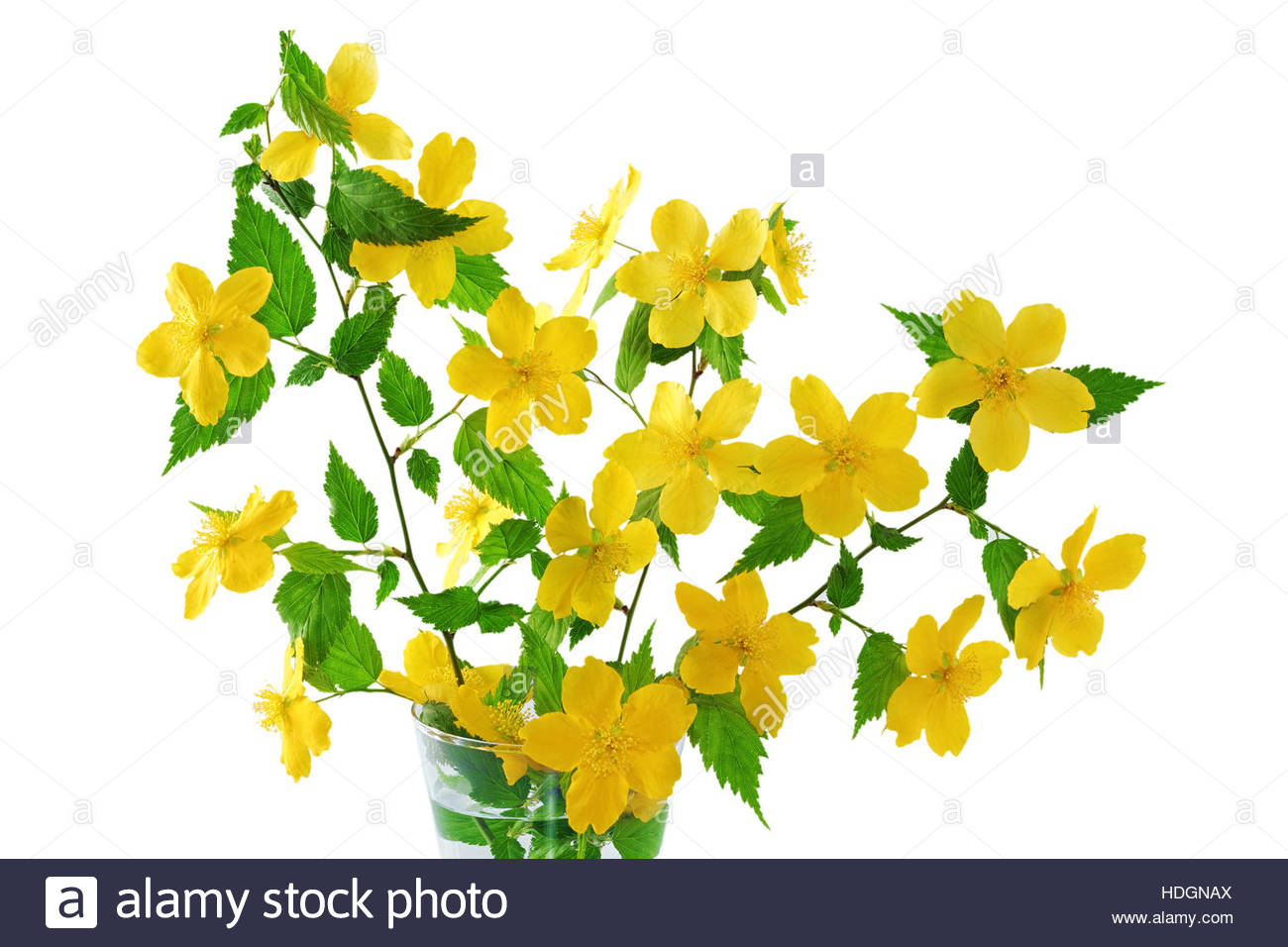 Bouquet Kerria Japonica Yellow Wildflowers In Vase Isolated On.