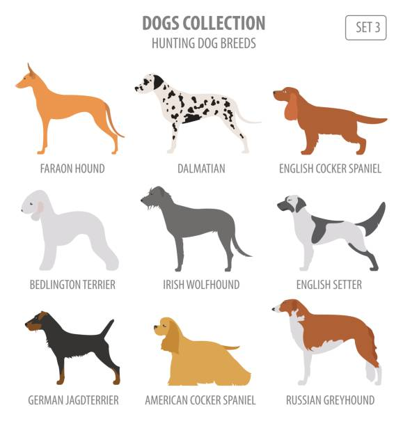 Kerry Blue Terrier Clip Art, Vector Images & Illustrations.