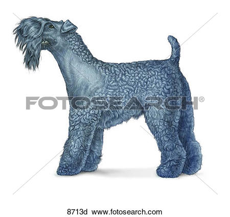 Clipart of Kerry Blue Terrier Unlabeled 8713d.