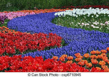 Stock Images of Flower bed in Keukenhof gardens.