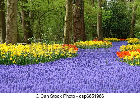 Stock Image of Spring flower bed in Keukenhof, the Netherlands.