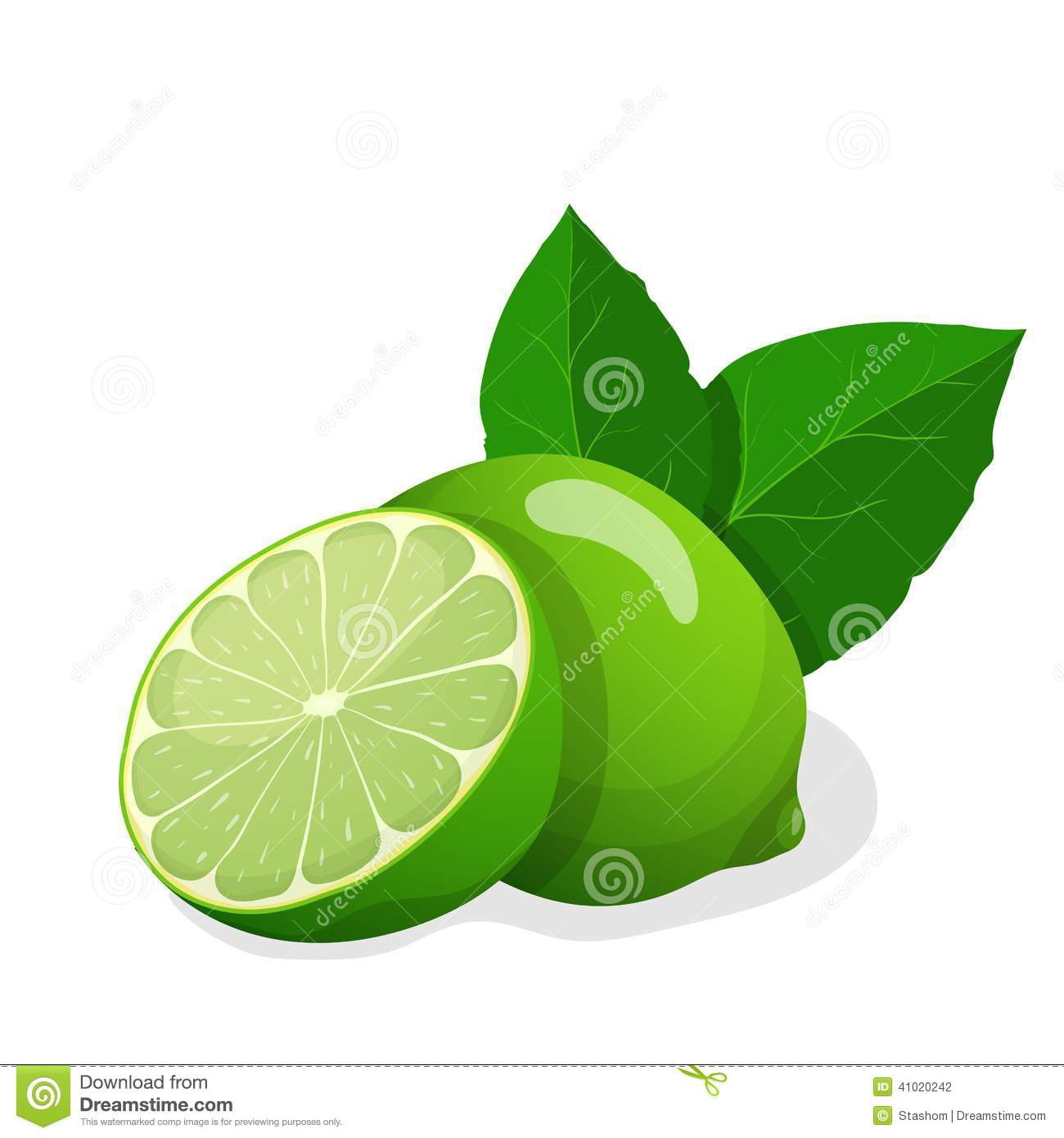 Vector Illustration Of Fresh Limes Stock Vector.