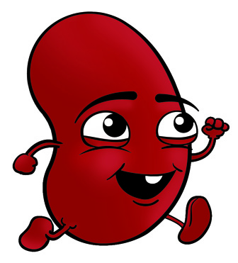 Free Kidney Disease Cliparts, Download Free Clip Art, Free Clip Art.