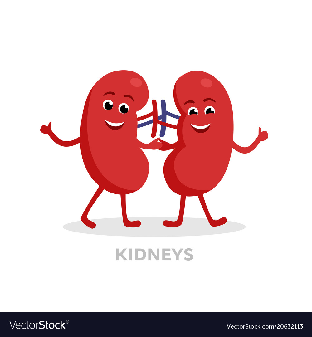 Strong healthy kidneys cartoon characters isolated.