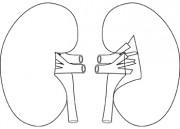 Similiar Kidney Shape Clip Art Keywords.