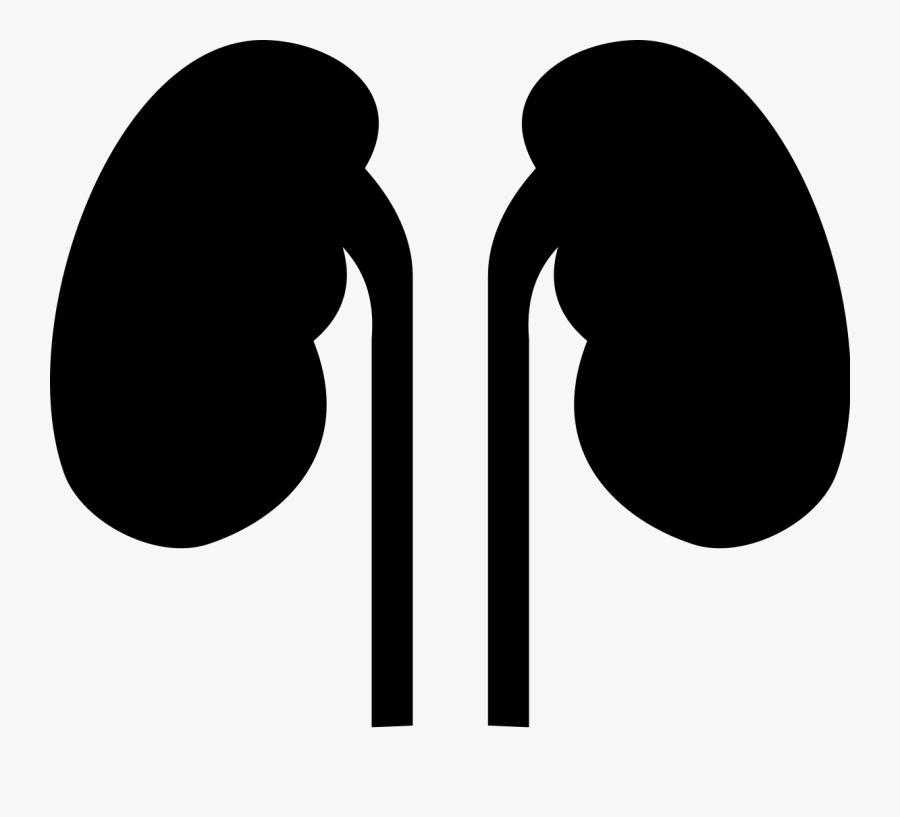 Transparent Kidney Png.