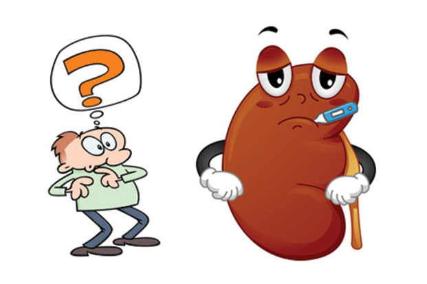 Kidney clipart kidney damage, Kidney kidney damage.