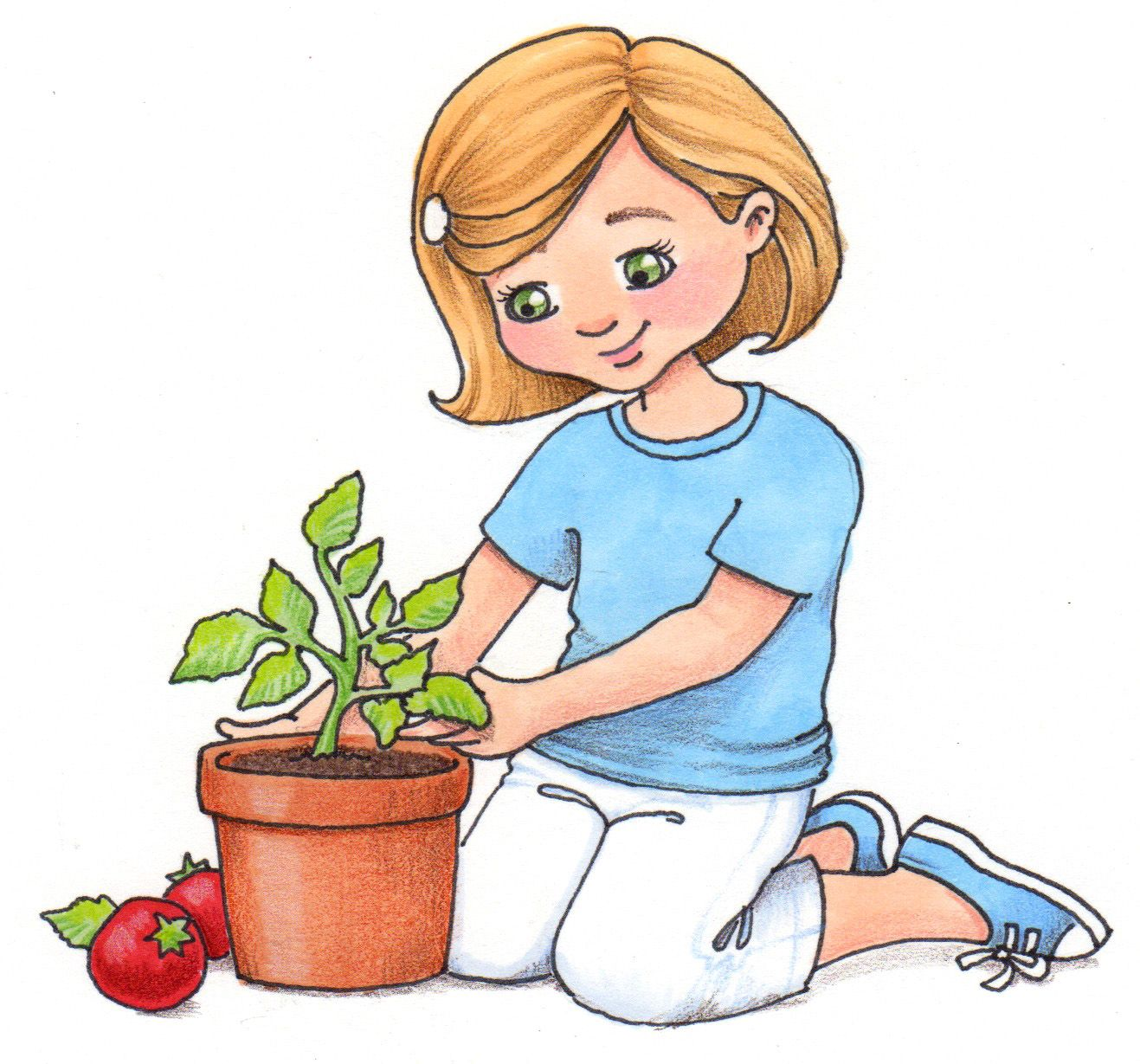 susan fitch design: How is your tomato plant?.