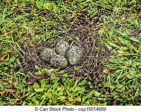 Stock Bilder von Kiebitz, Eier, südlich.