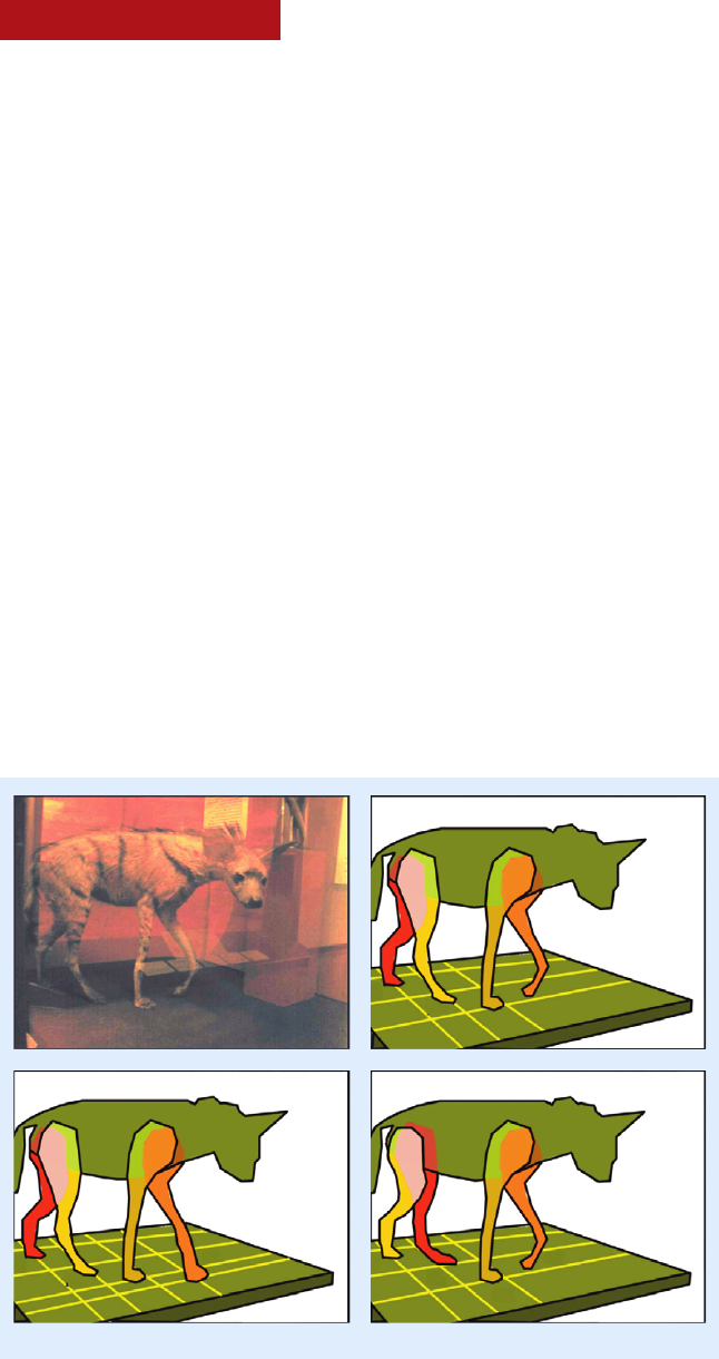 Erroneous quadruped walking depictions in natural history museums.