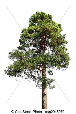 Pine Images and Stock Photos. 318,428 Pine photography and royalty.