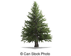 Pine Illustrations and Clip Art. 51,101 Pine royalty free.