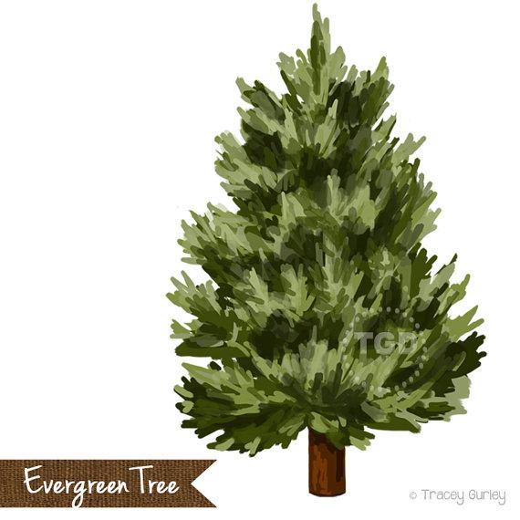 Immergrüner Baum ClipArt lackiert Hand von TraceyGurleyDesigns.
