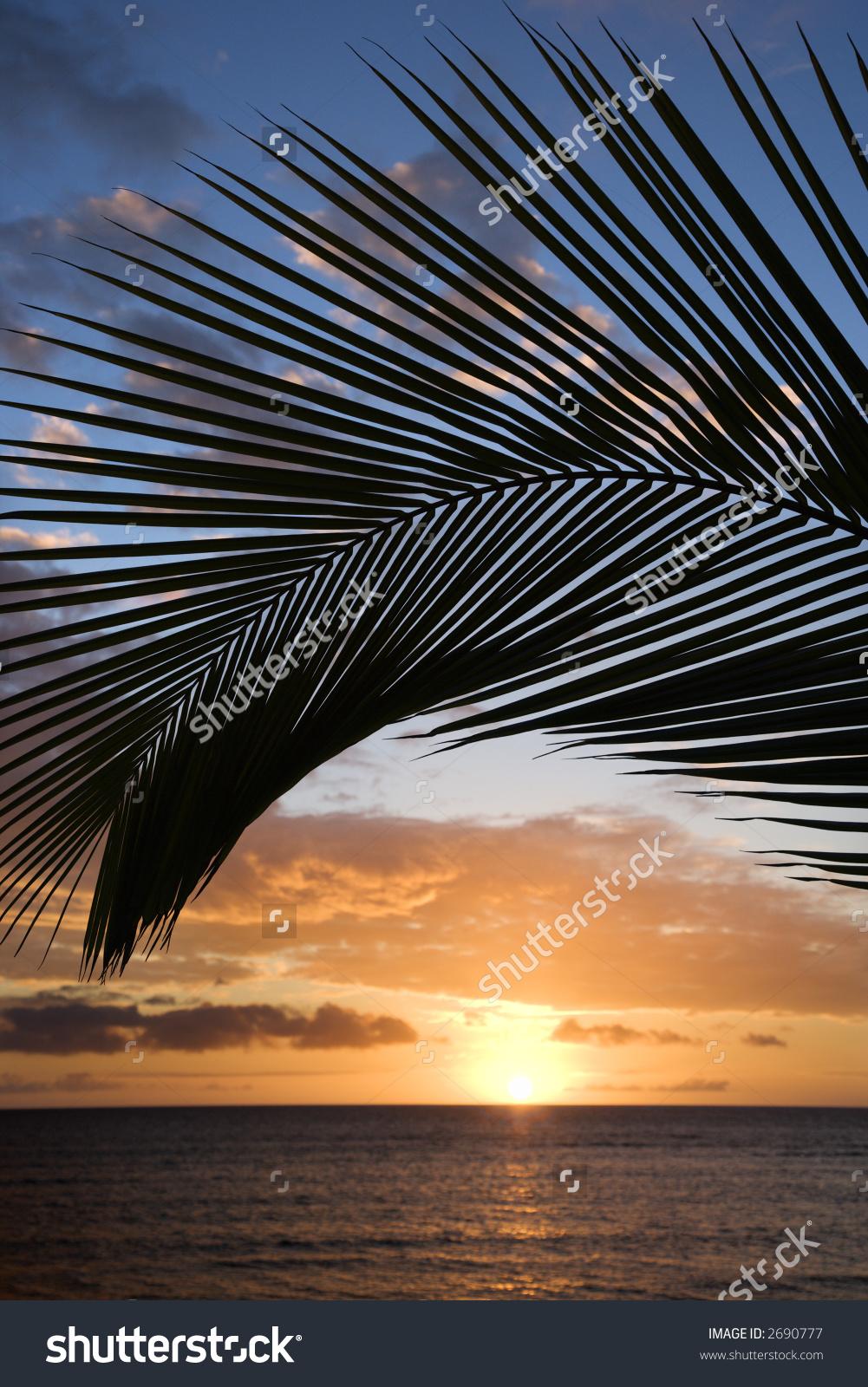 Sunset Sky Framed By Palm Fronds Stock Photo 2690777.