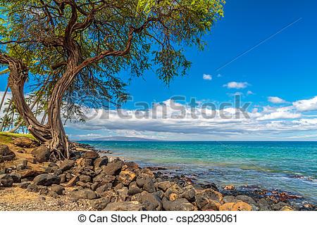 Stock Image of Kihei Coastline.