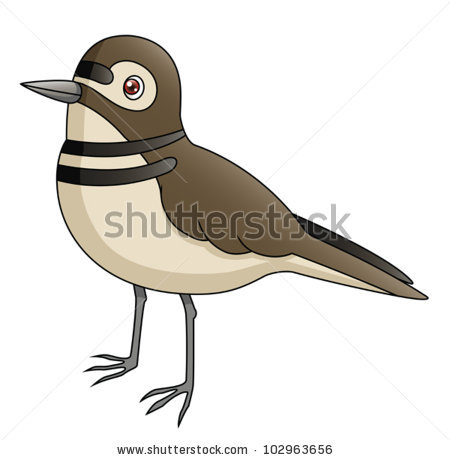 Vector killdeer free vector download (2 Free vector) for.