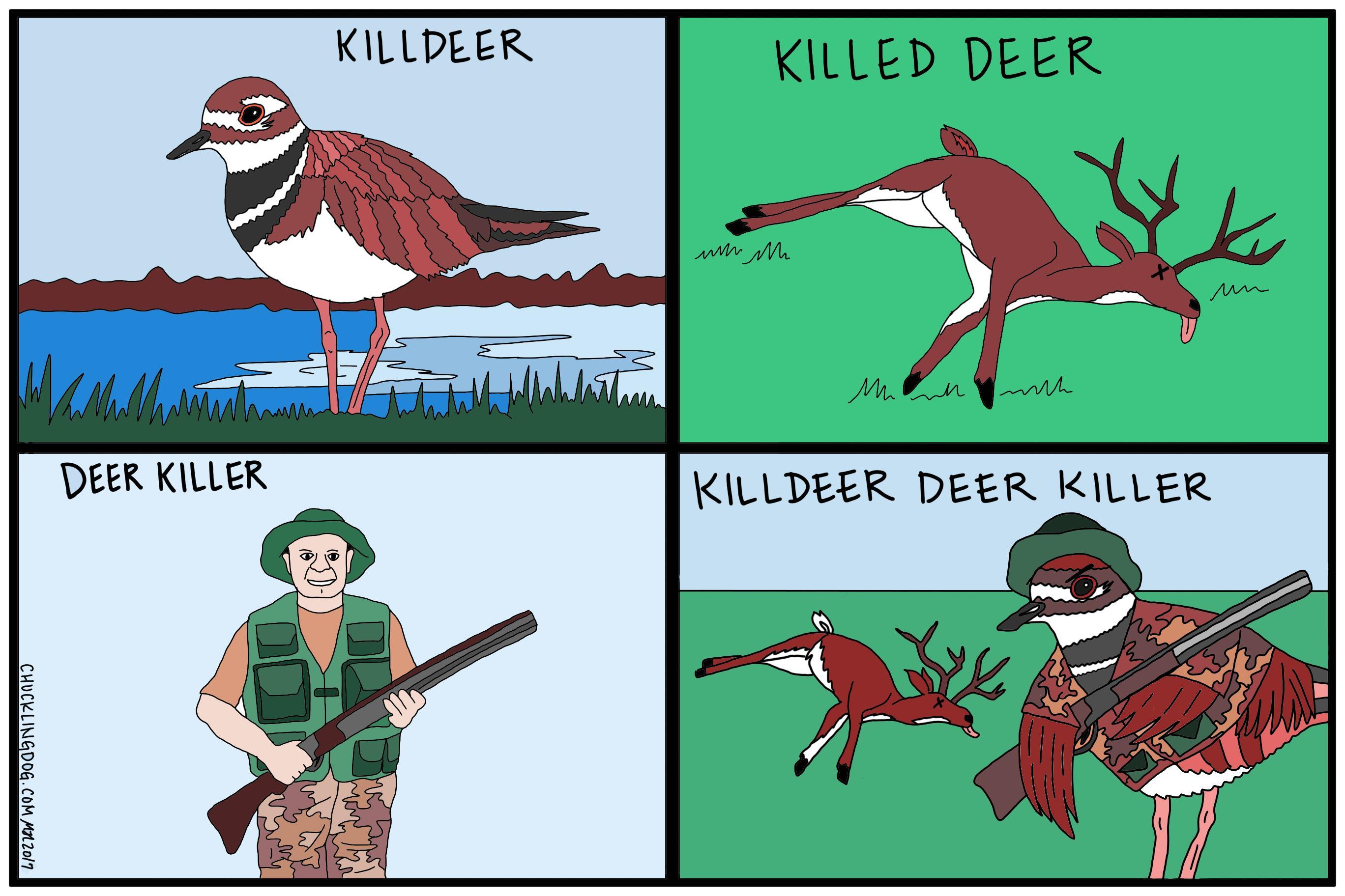 Killdeer.