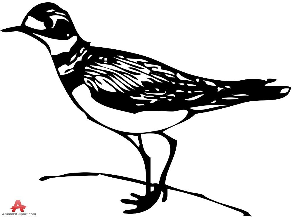 Killdeer Bird Clipart.