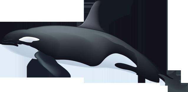 Killer Whale Clipart.