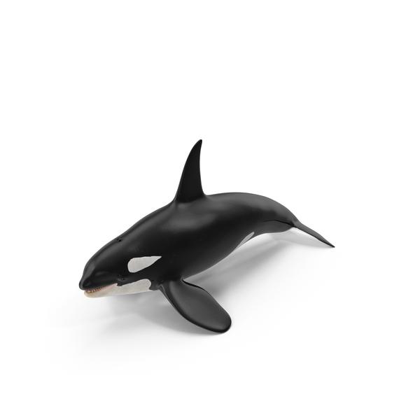 Killer Whale PNG Images & PSDs for Download.