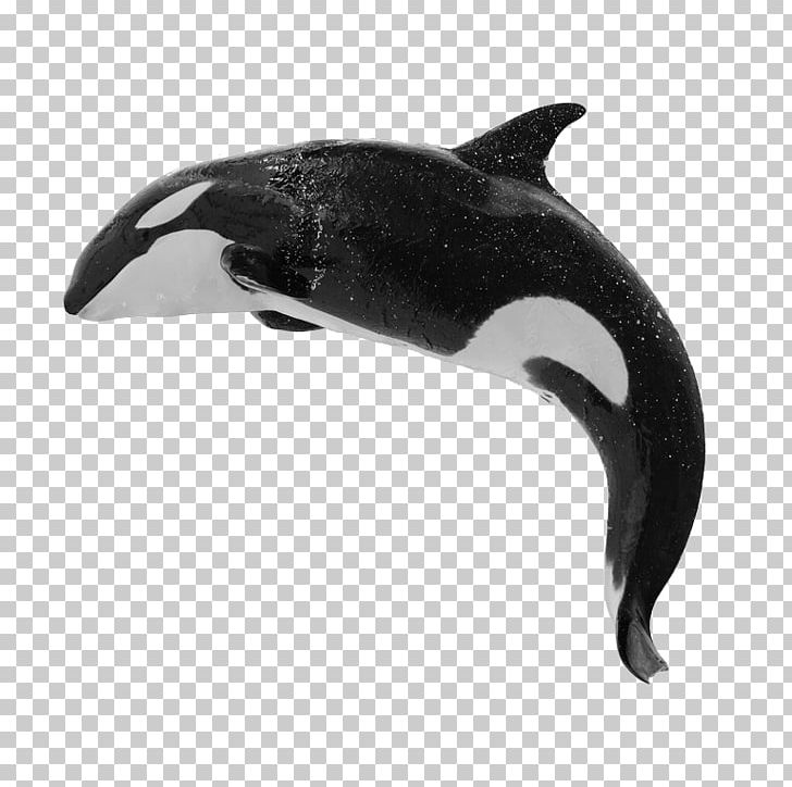 Killer Whale Baleen Whale Humpback Whale Blue Whale PNG, Clipart.