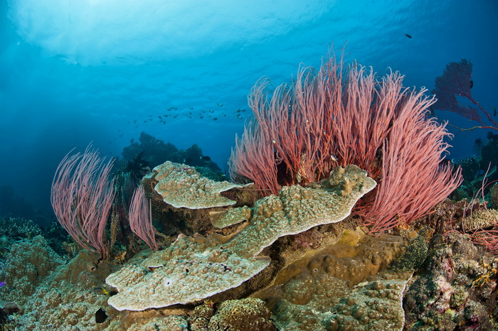 The Complete Guide to Diving Kimbe Bay.